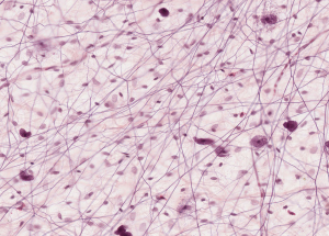 Connective Tissues Histology
