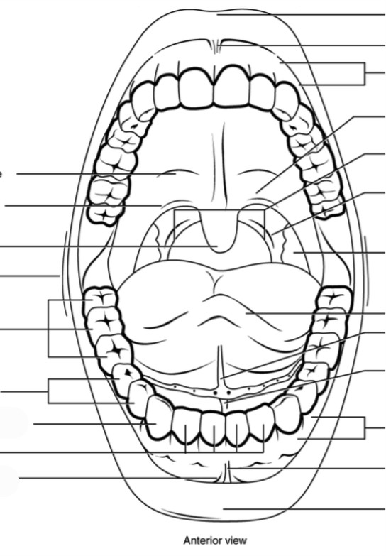 Predefined space to Label the different aspects of the mouth