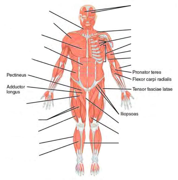 Pre Lab 10 Human Anatomy Lab Manual